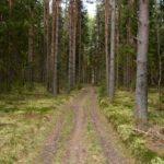 Дорога в мой лес